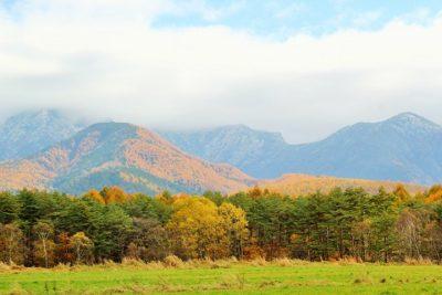 カラマツ林と冠雪の八ヶ岳